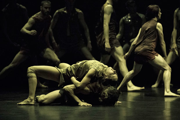 Sydney Dance Company in <I>Wildebeest</I>.<br />© Pedro Greig. (Click image for larger version)