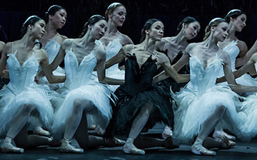 Zurich Ballet in Swan Lake.© Carlos Quezada. (Click image for larger version)